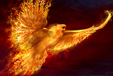 Phoenix Rising by Tom Wood Plastic Sign Wall Sign