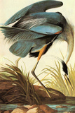 Audubon Great Blue Heron Bird Plastic Sign Wall Sign