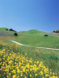 Yellow Flowers Along Side Rural Road with Rolling Landscape Photographie par Green Light Collection