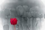 Tulip Accent Giclee Print by Katja Marzahn