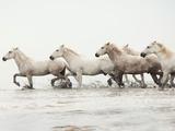 White Horses II Giclee Print by Irene Suchocki