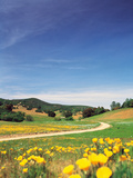 Yellow Flowers Along Side Rural Road with Rolling Landscape Photographic Print by Green Light Collection