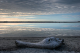 Driftwood Estuary Giclee Print by Nathan Secker