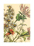 Furber Flowers IV - Detail Print by Robert Furber