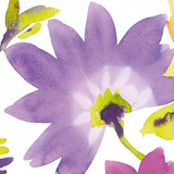 Violet Flower II Giclee Print by Sandra Jacobs