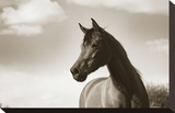 The Bay Mare Stretched Canvas Print by Barry Hart
