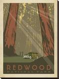 Redwood Impressão em tela esticada por  Anderson Design Group