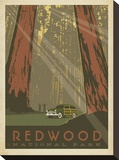 Redwood Stretched Canvas Print by  Anderson Design Group