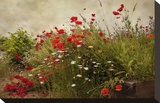 Poppy Garden Stretched Canvas Print by David Winston