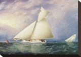 Yacht Race in New York Harbor Stretched Canvas Print by James E. Buttersworth