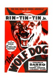 THE WOLF DOG, Rin Tin Tin Jr., 1933 Prints