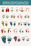 Animal Tracks of the North Eastern United States Plastic Sign Plastic Sign