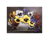 Rainbow of Pansies Giclee Print by Victor Santos