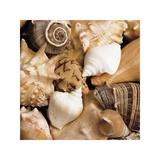 Beachside Shells Giclee Print by Boyce Watt