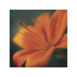 Orange on Turquoise Giclee Print by Jane Ann Butler