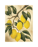 Italian Harvest, Lemons Giclee Print by Doris Allison