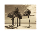 Key Biscayne I Giclee Print by Dennis Kelly