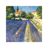 Lavender Fields Giclee Print by Philip Craig