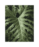 Tropica I Giclee Print by Boyce Watt