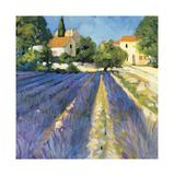 Lavender Fields Lámina giclée por Philip Craig
