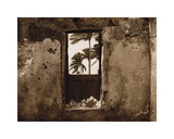 Palm View I Giclee Print by C. J. Groth