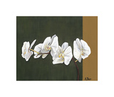 Orchid Study I Giclee Print by Ann Parr