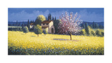 Spring Blossoms Giclee Print by David Short