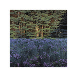 Shadowed Meadow Sunlit Pines Giclee Print by Jon R. Friedman