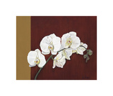 Orchid Study II Giclee Print by Ann Parr