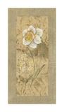 Antique Daffodil Giclee Print by Stefania Carlini