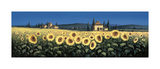 Tuscan Panorama, Sunflowers Giclee Print by David Short