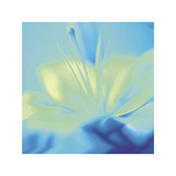 Impression Lily Giclee Print by Jane Ann Butler