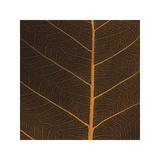 Bo Leaf III Giclee Print by Andrew Levine