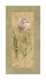 Antique Tulip Giclee Print by Stefania Carlini