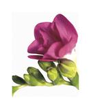 Floral Saturation II Giclee Print by Boyce Watt