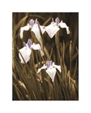 Spring Blossoms II Giclee Print by Boyce Watt