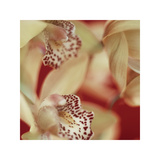 Cymbidium Flow I Giclee Print by Jane-Ann Butler