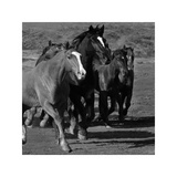 Leader of the Pack Giclee Print by Wendy Caro