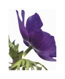 Floral Saturation III Giclee Print by Boyce Watt