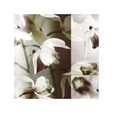 Cymbidium Orchid I Giclee Print by Jane Ann Butler