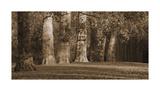 Hyde Park Afternoon I Giclee Print by Boyce Watt