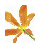 Floral Saturation IV Giclee Print by Boyce Watt