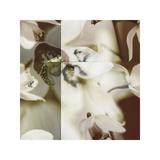 Cymbidium Orchid II Giclee Print by Jane Ann Butler