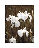Spring Blossoms I Giclee Print by Boyce Watt