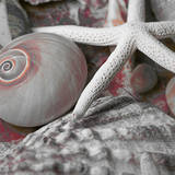 Seashells in Pink II Poster