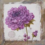 Fleur Violette Prints