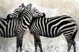 Zebras Posters