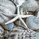 Seashells in Blue I Posters