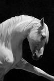 White Horse Prints