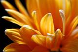 Sun Flowers II Stampe